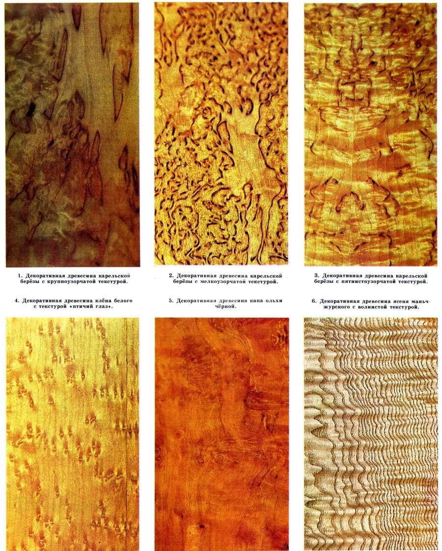 Рис. 12. текстурный рисунок на примерах разных пород деревьев (отдельных экземпляров)